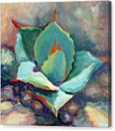 Young Agave Canvas Print