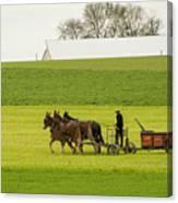 Young Amish Farmer Canvas Print