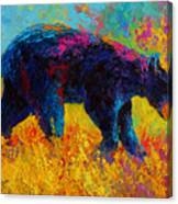 Young And Restless - Black Bear Canvas Print