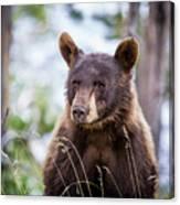 Young Black Bear Canvas Print