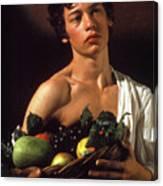 young boy Caravaggio Canvas Print