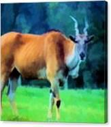 Young Eland Bull Canvas Print