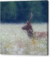 Young Elk In The Smokies. Canvas Print