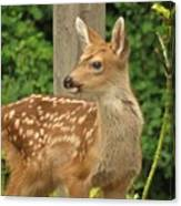Young Fawn Canvas Print