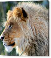Young King Close Up Canvas Print