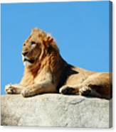 Young Male Lion Reclining On A Rock Canvas Print