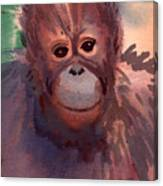 Young Orangutan Canvas Print