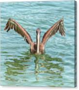 Young Pelican 0087 Canvas Print