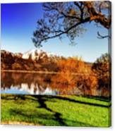 Young Trees Canvas Print