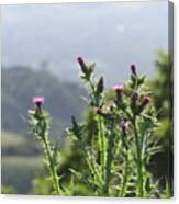 Young Thistles Canvas Print
