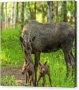 Young Twins Canvas Print