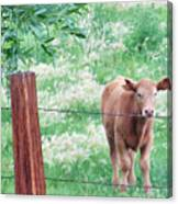 Youngster Canvas Print