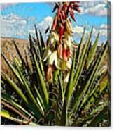 Yucca Bloom Canvas Print