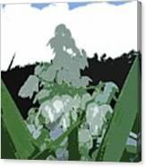 Yucca Blossom Canvas Print