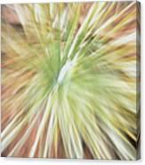 Yucca Burst Canvas Print