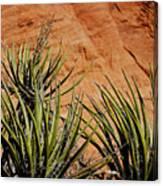 Yucca Family Canvas Print
