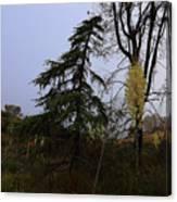 Yucca Filamentosa Rainy Day In Malibu Canvas Print