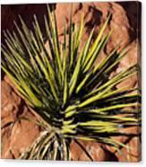 Yucca Five Canvas Print