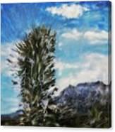 Yucca Glow  Canvas Print