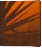 Yucca Shadow Canvas Print