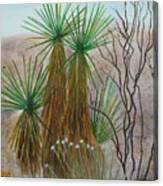 Yucca Stand Canvas Print