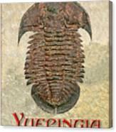 Yuepingia Fossil Trilobite Canvas Print