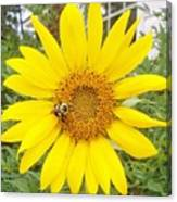 Yummy Sunflower Canvas Print