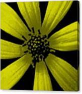 Yummy Yellow Canvas Print