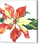 Yupo Poinsettia Canvas Print