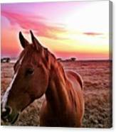 Zack During Sunset Canvas Print