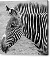 Zebra - Here It Is In Black And White Canvas Print