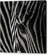 Zebra 3 Canvas Print