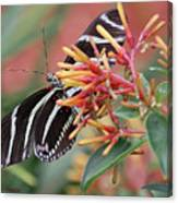 Zebra Butterfly With Blue Eyes Canvas Print