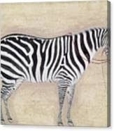 Zebra, C1620 Canvas Print