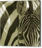 Zebra Close Up A Canvas Print