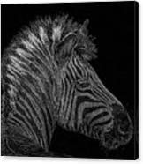 Zebra Computer Drawing Canvas Print