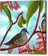Zebra Doves Or Barred Dove Birds #309 Canvas Print