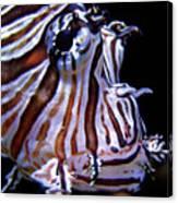 Zebra Fish Canvas Print