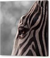 Zebra I Canvas Print
