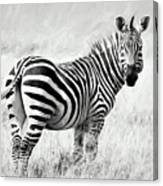 Zebra In The African Savanna Canvas Print