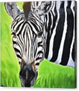 Zebra In The Wild Canvas Print