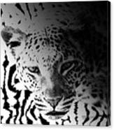 Zebra Kill Canvas Print
