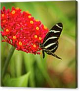 Zebra Long Wing Butterfly Canvas Print