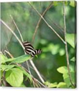 Zebra Longwing Butterfly About To Take Flight Canvas Print
