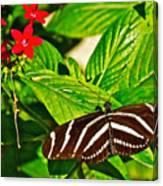 Zebra Longwing Butterfly In Living Desert Zoo And Gardens In Palm Desert-california  Canvas Print