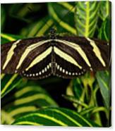 Zebra Longwing Butterfly On A Sanchezia Nobilis Tropical Plant Canvas Print