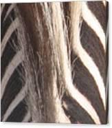 Zebra Mane Canvas Print