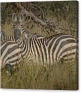 Zebra On The Serengeti Canvas Print