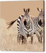 Zebra Pair Canvas Print