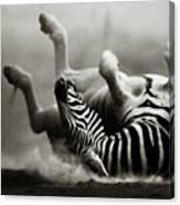 Zebra Rolling Canvas Print